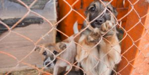 в Гродно приют для животных